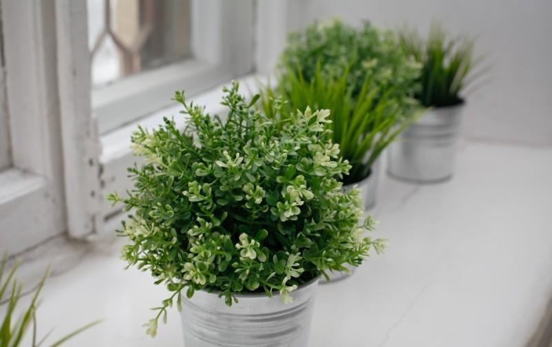 Полезные растения выращивание дома 41